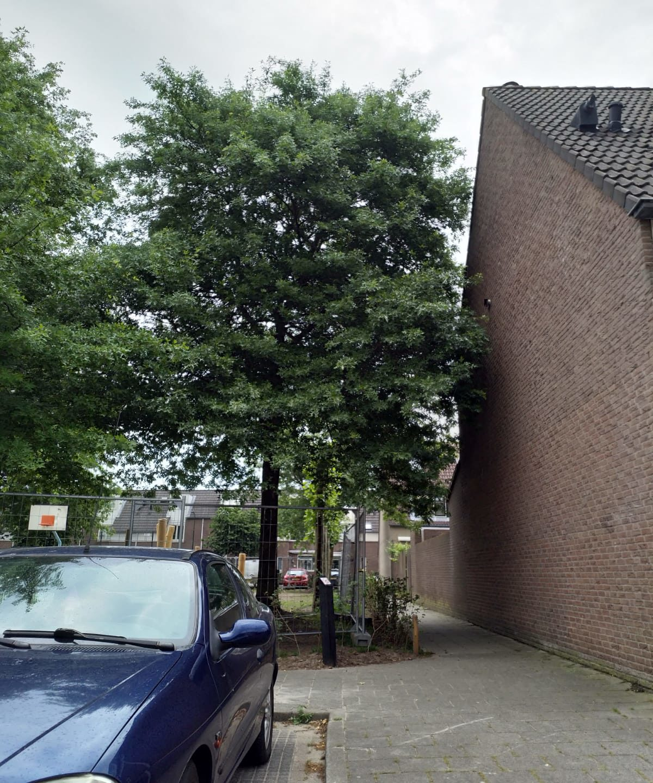 Motie Lokaal Liberaal & VVD en M2000 snoeien en dan weer groeien.