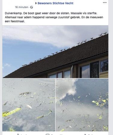 foto van de gevolgen van het maaien in de sloot Duivenkamp